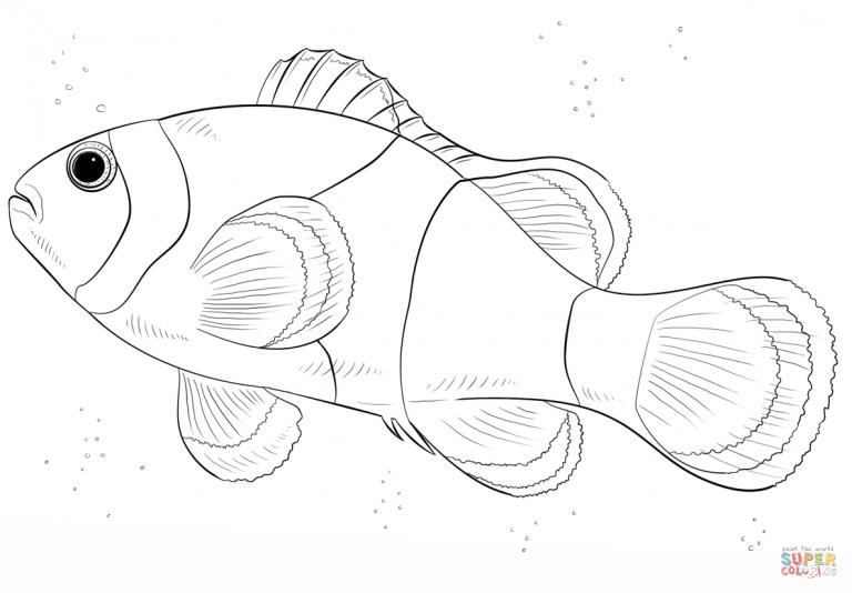Free Printable Coloring Pages Throughout Clown Fish Coloring Pages Ikan Badut Lukisan Ikan
