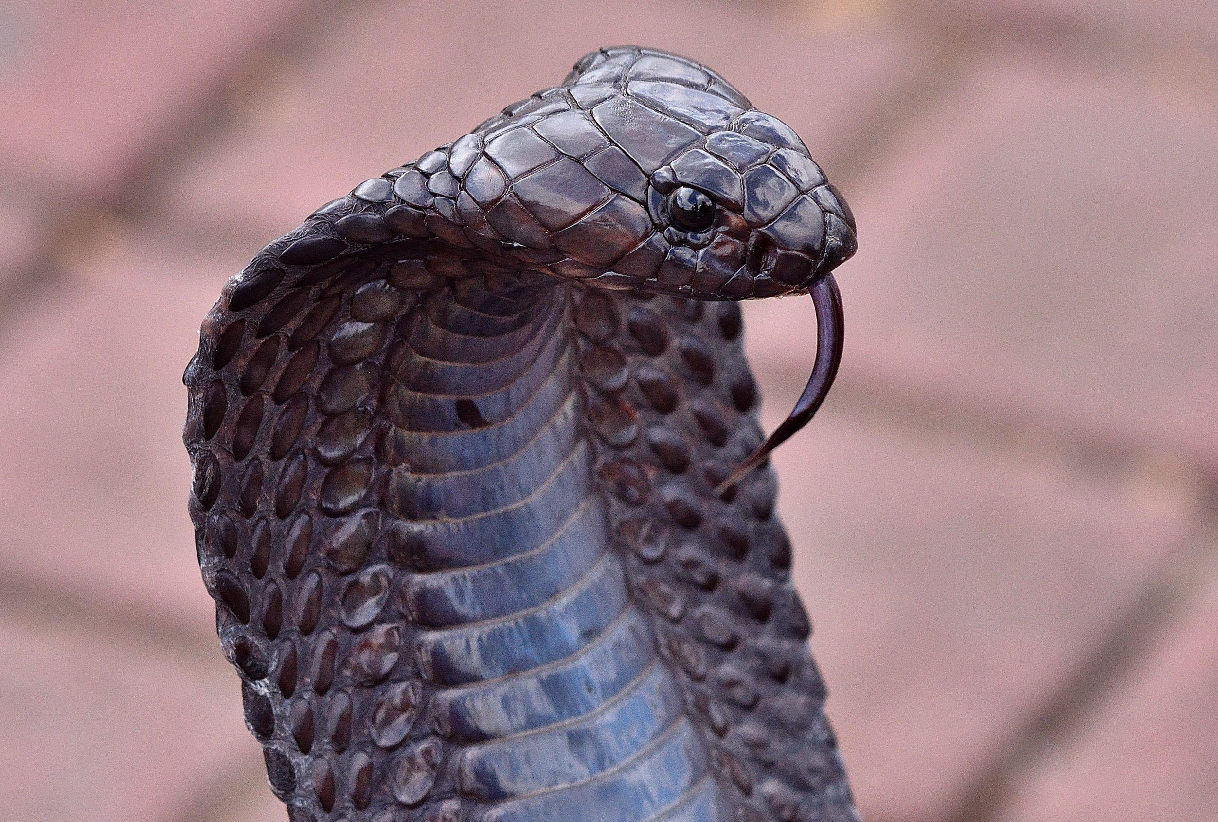 Pin by Robert Rising on SNAKE! Snake, Animals