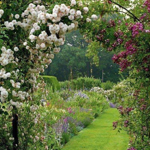 Was wären englische Gärten ohne Rosen?