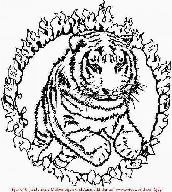 Tiger 040 (kostenlose Malvorlagen und Ausmalbilder auf www.wicoworld ...