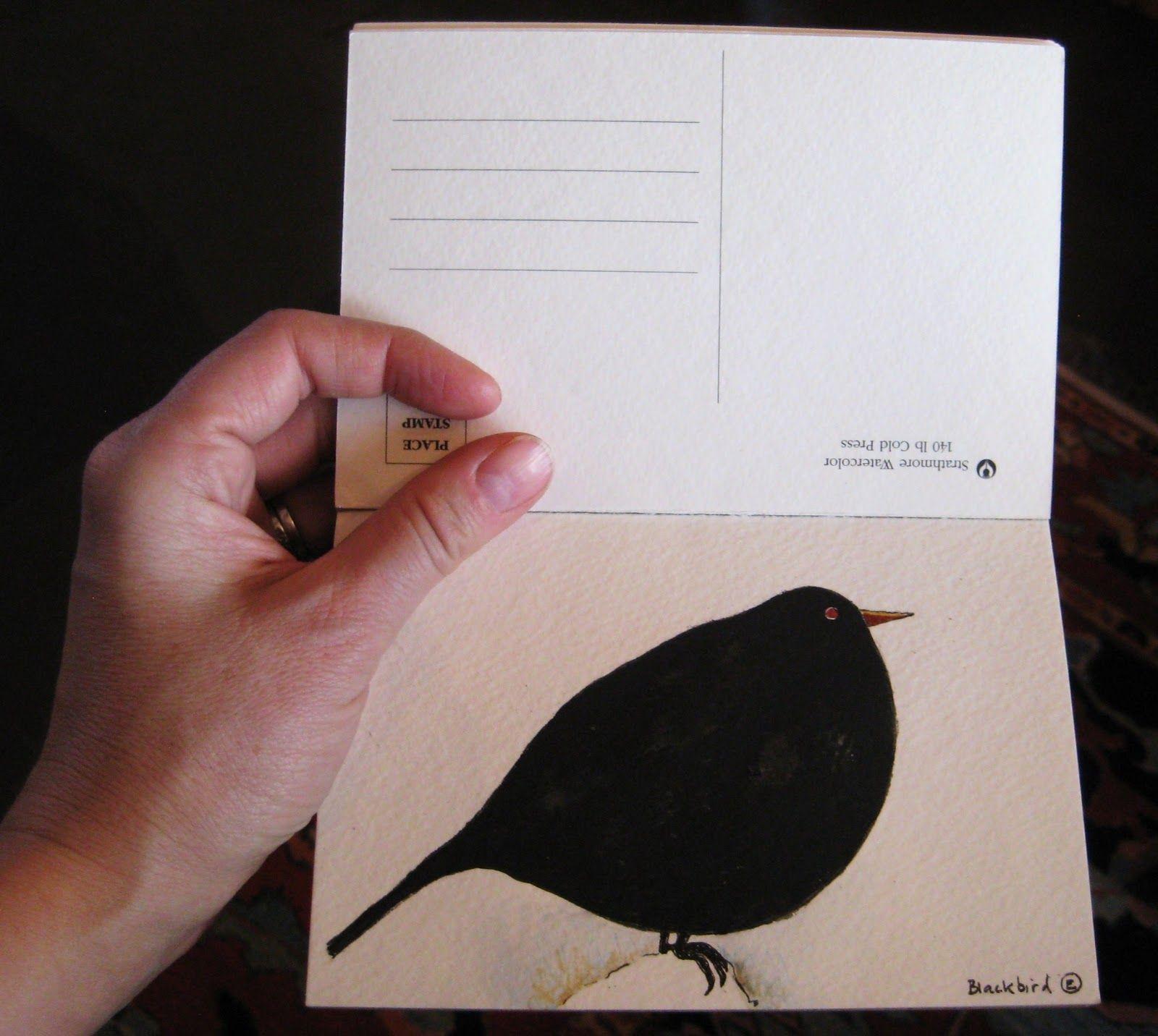 Plump blackbird by Charlotte Hamilton