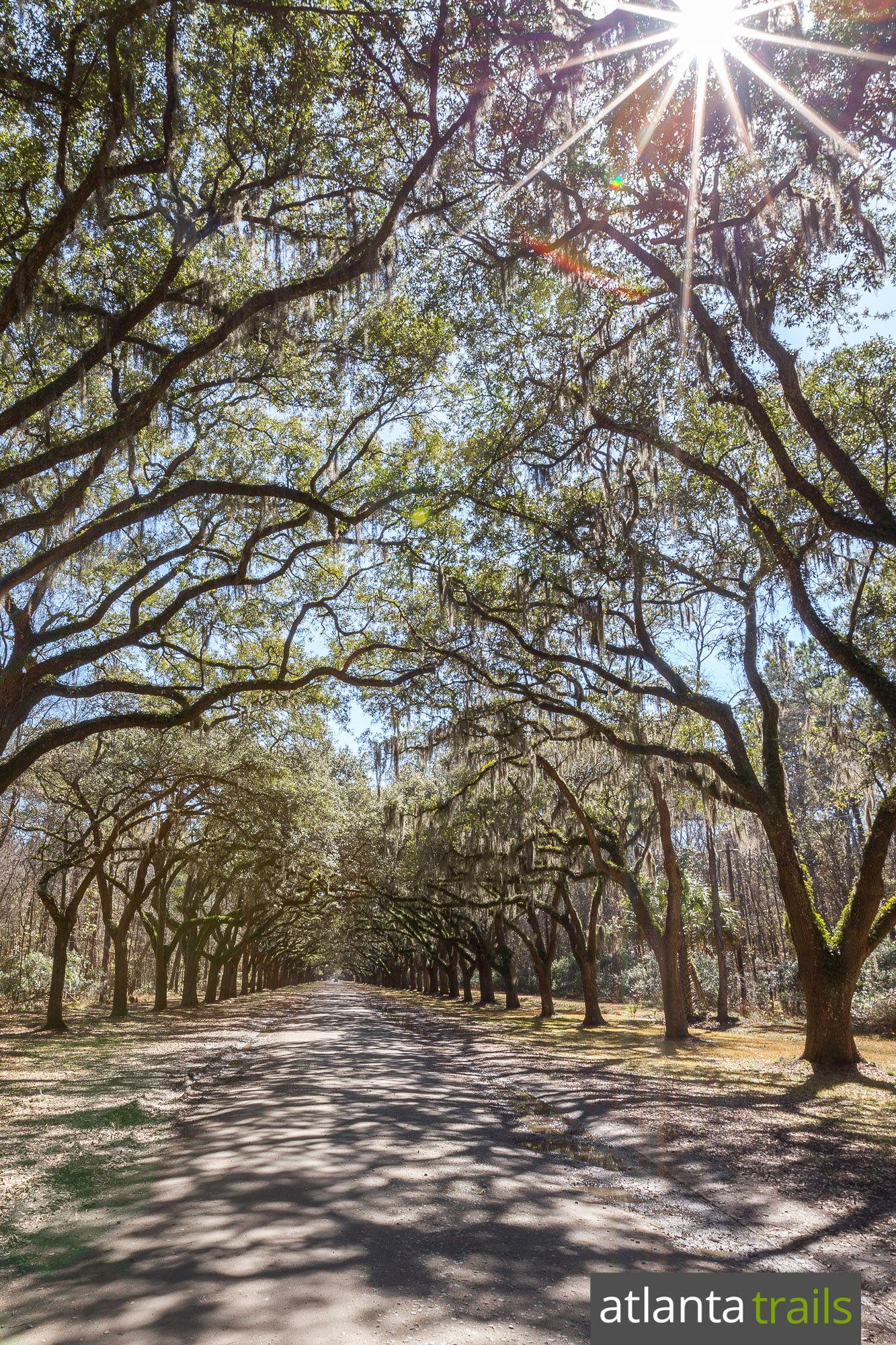 Wormsloe Historic Site Top Hikes Near Savannah Hiking In Georgia Savannah Chat Historical Sites