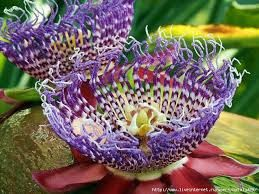 Image result for самые красивые цветы