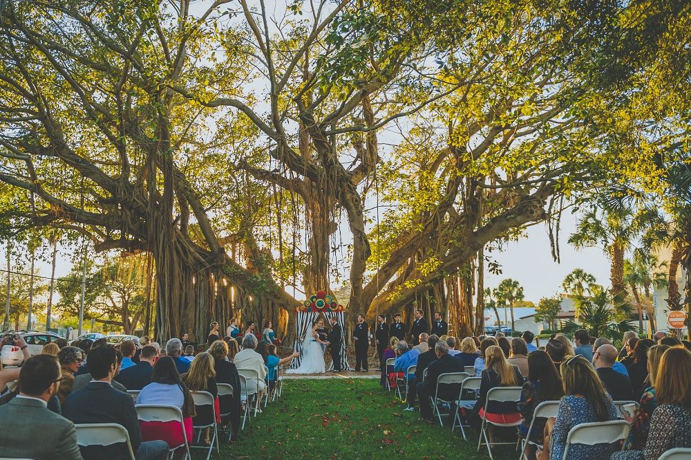 Ceremony Under The Banyan Tree At St Pete Shuffle Shuffleboard