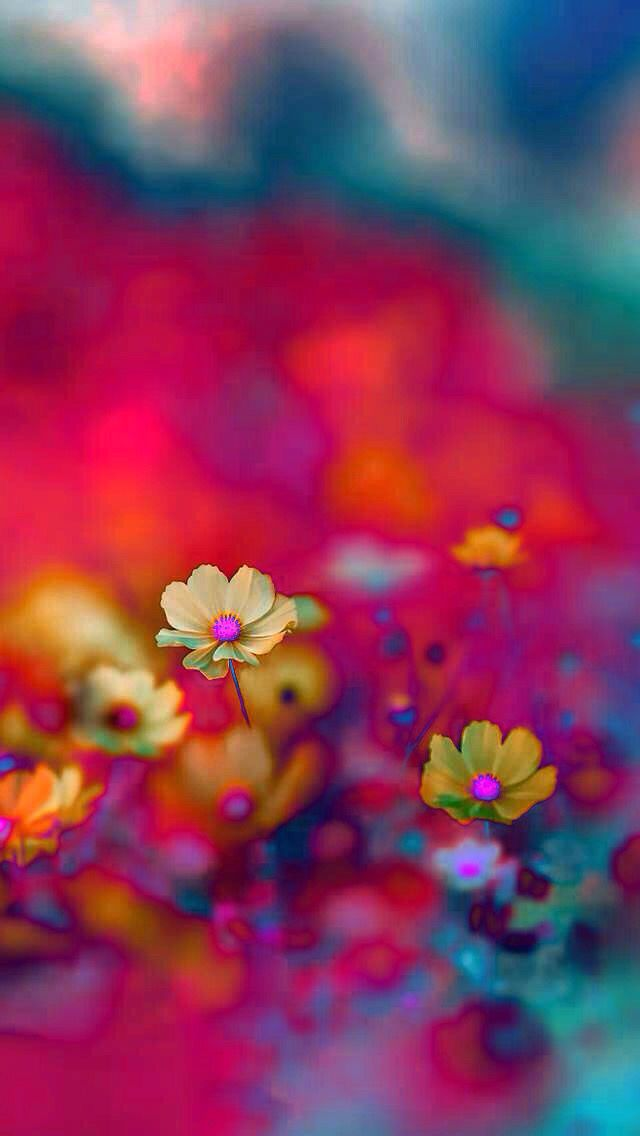 Color Flowers Iphone Background Wallpaper Beautiful Flowers Bright Pastels Iphone colorful flower wallpaper