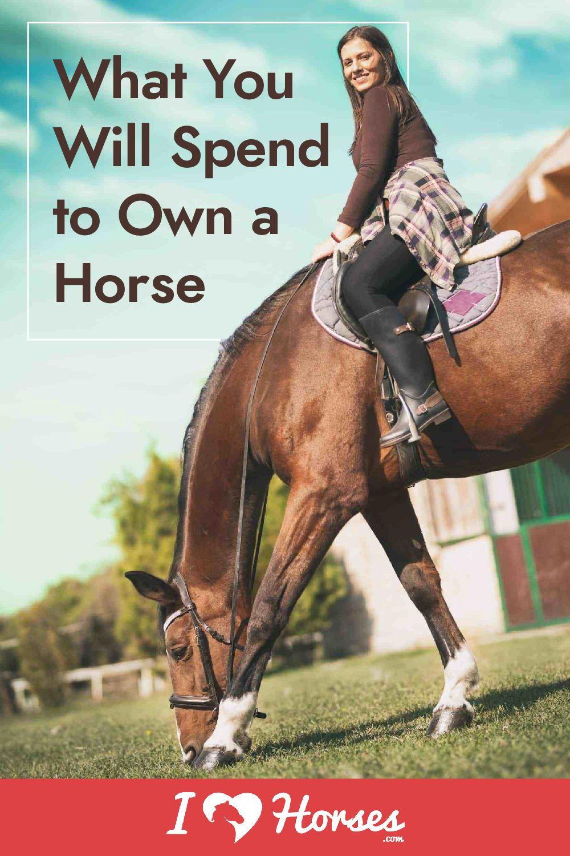 Pin on Horses )