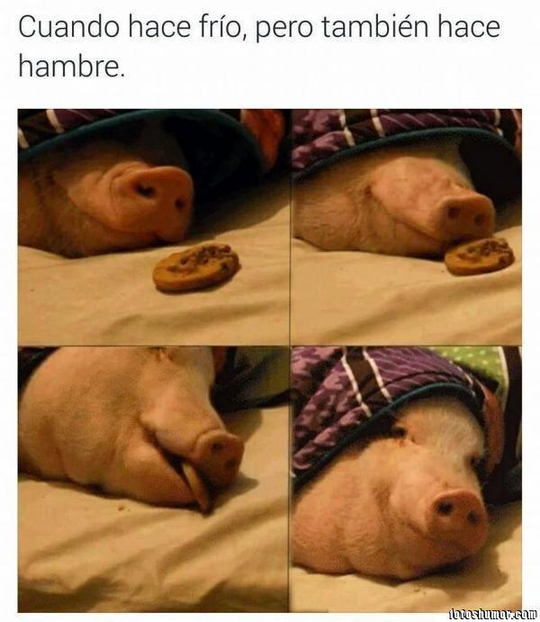 Fotos Graciosas De Cerdos Imagenes Divertidas Y Graciosas Imagenes Graciosas Meme Gracioso Memes Divertidos