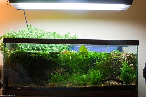 fish tank lighting ideas. Hanging Aquarium Light For Planted Tank Fish Lighting Ideas N