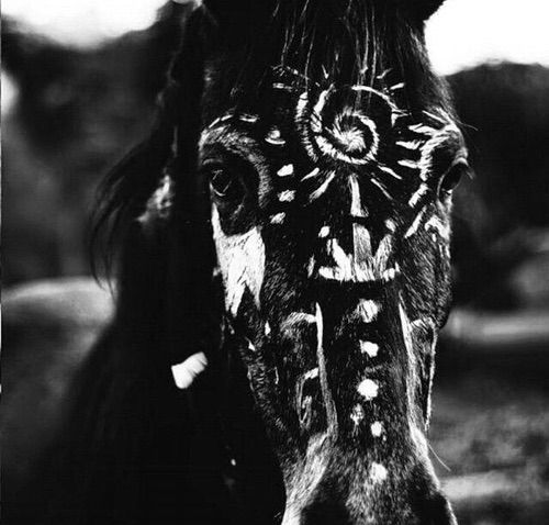 Bild über We Heart It https://weheartit.com/entry/167644111 #background #blackandwhite #drawing #horse #love #passion #riding #nicepicture