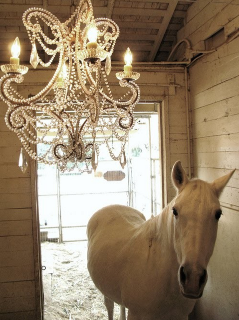 Which came first the horse or the chandelier love this animal which came first the horse or the chandelier love this aloadofball Image collections