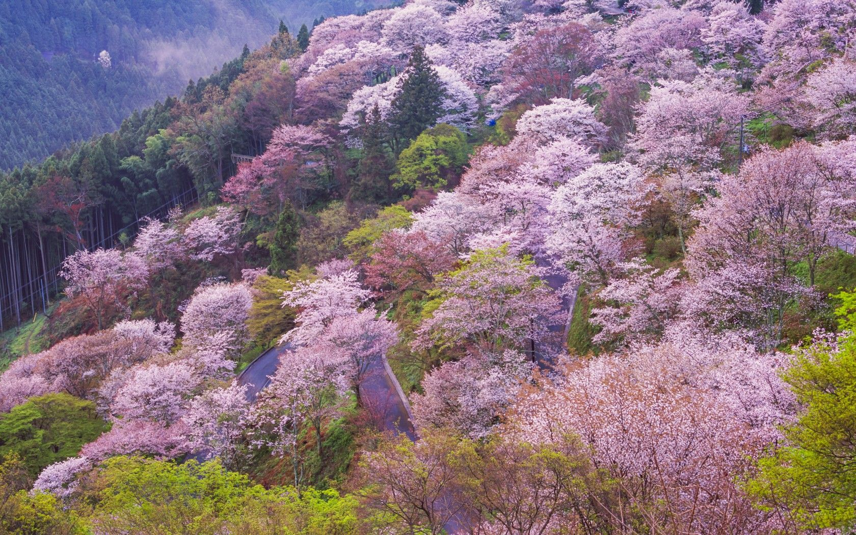 The best places to go in spring Japan, Malaysia and Scenery