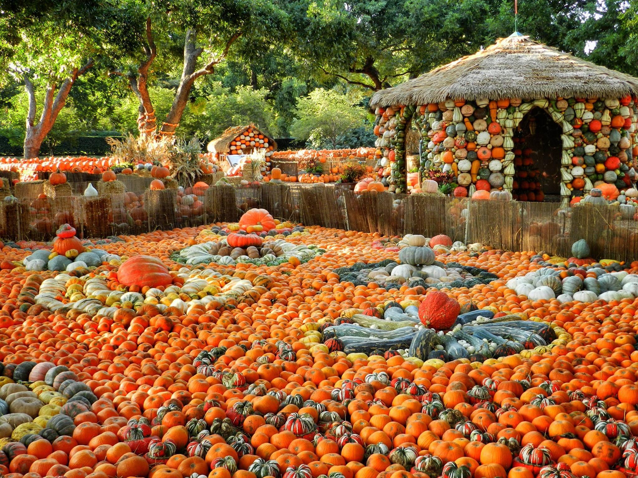 Dallas Arboretum and Botanical Garden.....wow | Fαℓℓ ínto ᎯUTUMN ...