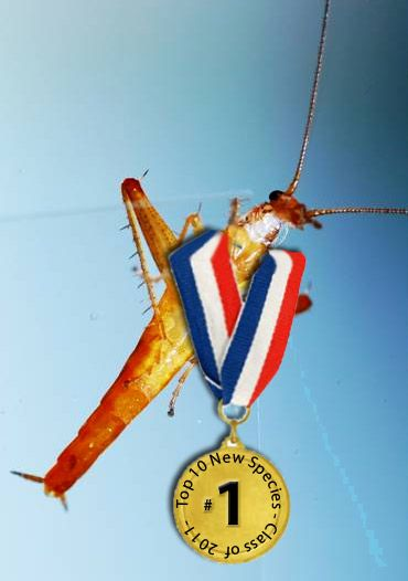 Jumping Roach was discovered this past year. Awarded top 10 new species, check ASU's insect department for details.