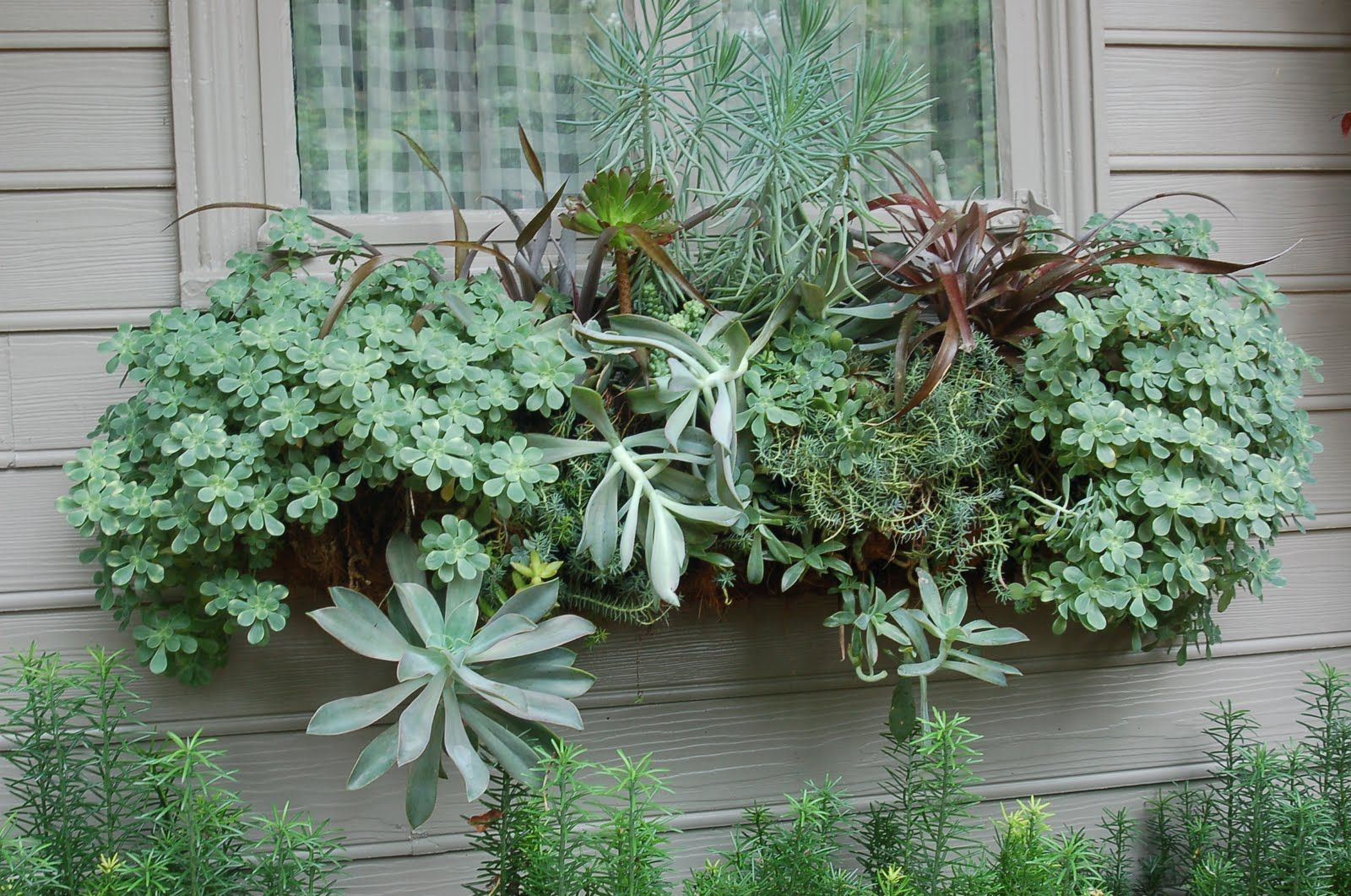 Succulent Arrangement Ideas | ... ideas on planting with these extremely drought tolerant plants check
