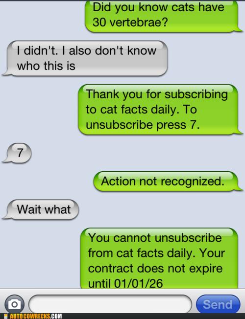 bahahaha can t escape cat facts humor me pinterest cat