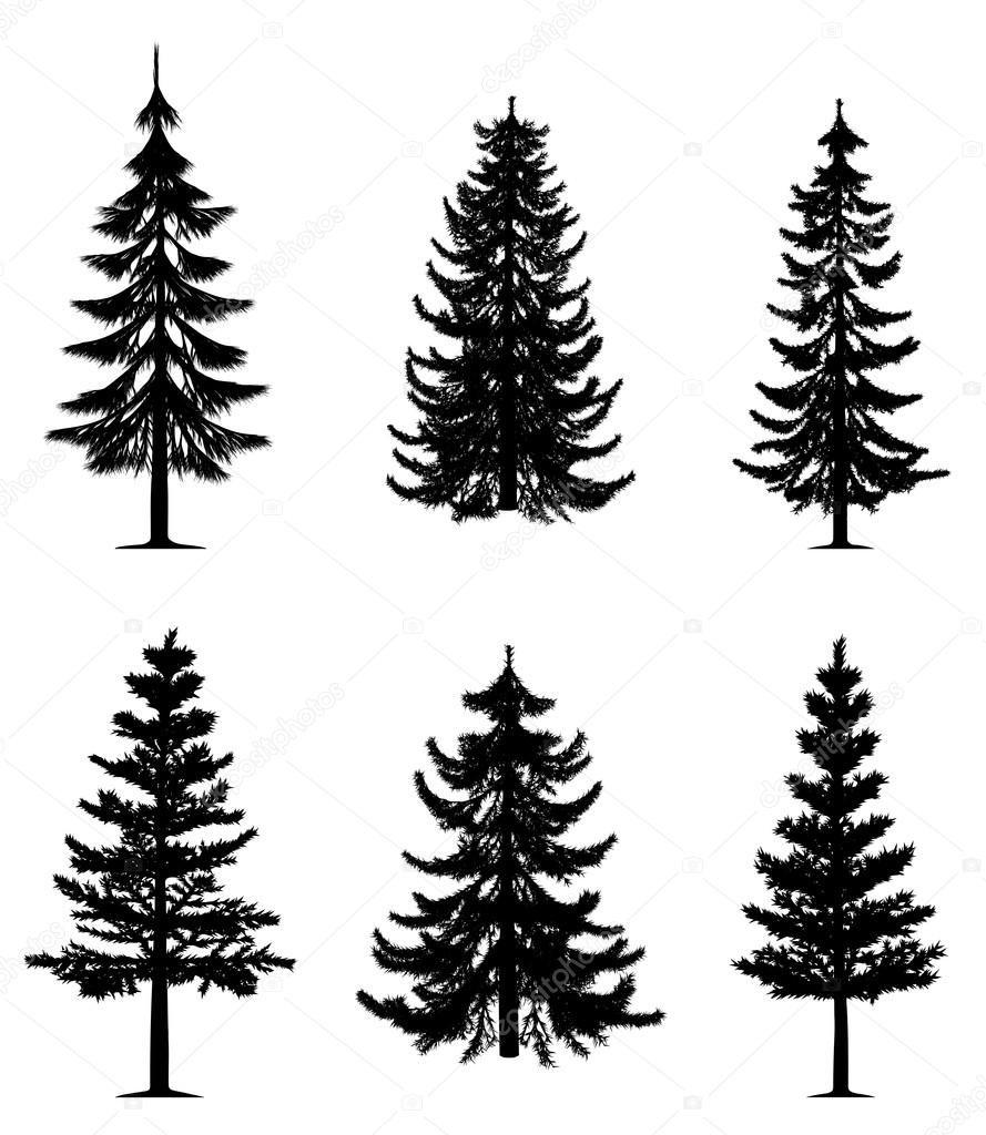 Herunterladen Kiefer Bäume Sammlung Stockillustration 4227674
