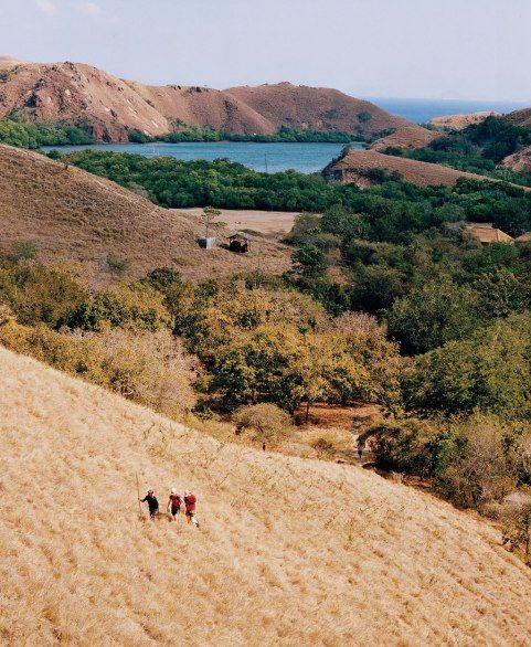 KOMODO NATIONAL PARK Hikers on Rinca, one of the main islands of Komodo National Park, in search of its famed giant lizards.