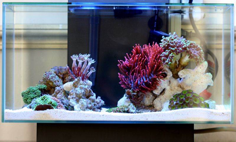 Saltwater fluval edge marine nano reef pictures for Aquarium recifal nano