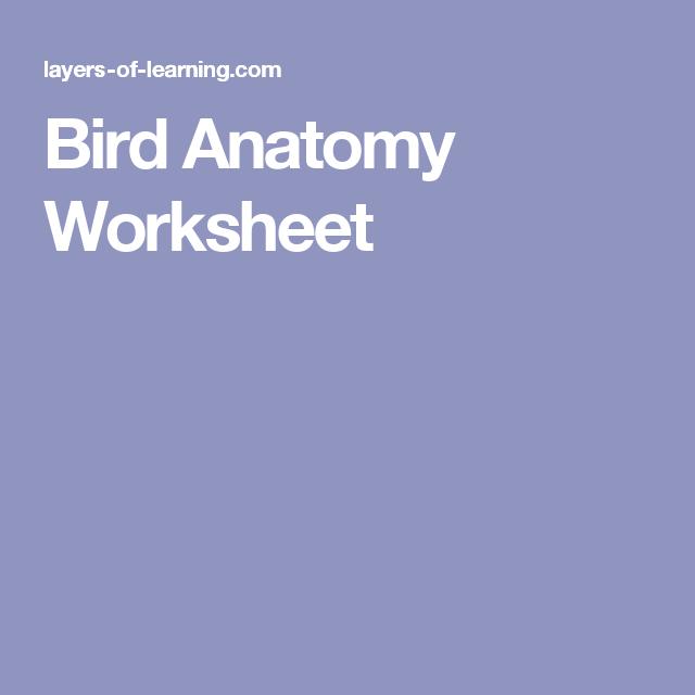 Bird Anatomy Worksheet | AHG | Pinterest | Worksheets, Anatomy and Bird