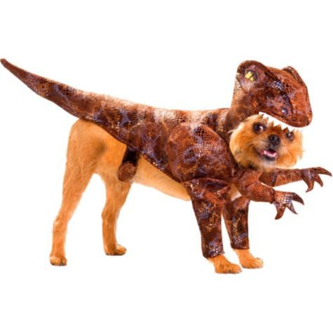 Animal Planet Raptor Dinosaur Dog Costume - Party City - I want this for my playful Chihuahua!  sc 1 st  Pinterest & Animal Planet Raptor Dinosaur Dog Costume - Party City - I want this ...