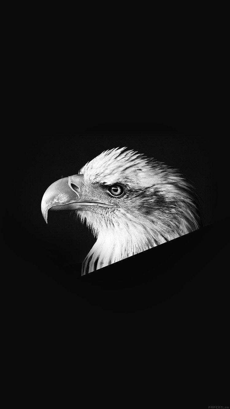Eagle Dark Animal Bird Face Bw Wallpaper Hd Iphone Iphone Wallpaper Blue Wallpaper Iphone Forest Wallpaper Iphone
