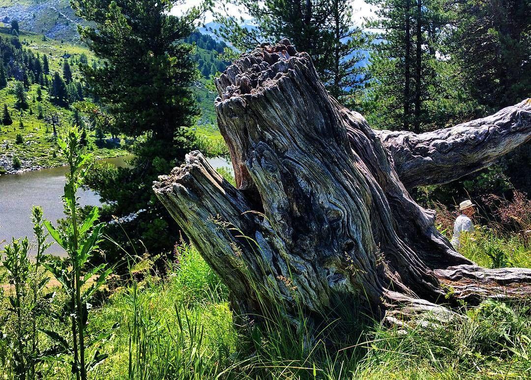 Piece of wood #tracouet #nendaz #igersuisse #valaiswallis #nendazisbeautiful #inlovewithnendaz #suisse #montagnes #mountains #switzerland