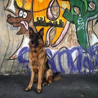 Während Herrchen gerade mal wieder sein Motorrad in Szene setzt, suchen wir uns auch schöne Plätzchen zum Fotos machen 😎 Heute Vormittag waren wir bereits beim Agility und haben uns darin versucht. Scheint ziemlich Spaß zu machen 😃 Wie verbringt ihr heute den Samstag? #hund #gsd #gsdlove #gsdofig #gsdofinstagram #deutscherschäferhund #instadog #dogsofinstagram #meinhund #dogblog #herzenshund #photooftheday #schäferstunde #hundeblog #schäferhund #ilovemydog #hundeliebe #gsdofigworld #...