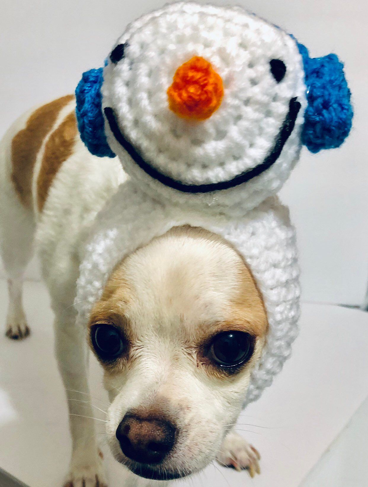 cefdfbad472 Excited to share this item from my  etsy shop  Snowman Dog Hat ...