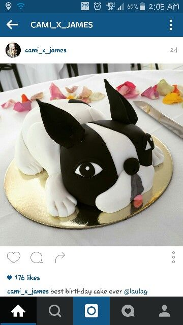 Remarkable Boston Terrier Cake Met Afbeeldingen Taart Franse Bulldog Funny Birthday Cards Online Alyptdamsfinfo