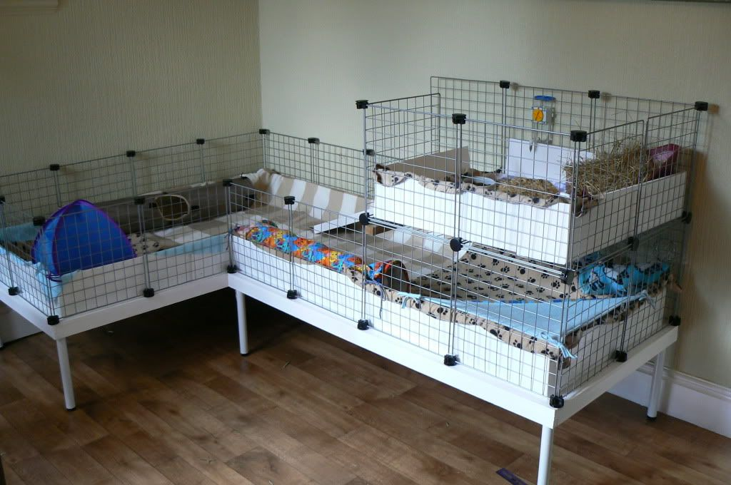 Diy table to fit custom cage sizes guinea pig cage ideas for Coroplast guinea pig cage for sale