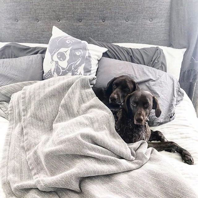 Reposting @barkleyandwagz: There's no time that's not appropriate for a snuggle time! #snugglesaretimeless @pointerproblems . . Love their linocut GSP pillow? Get one customized just fur you at www.etsy.com/shop/barkleyandwagz 🐶🐶🐾 . . . #dogsofinstagram #dogsofinsta #cutenessoverload #dogsofig #dogsarejoy #ilovedogs #gsp #germanshorthairedpointer #pointergram #pointersofinstagram #pointersofig #gspsofinstagram
