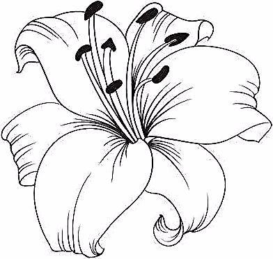 Lys Blanc Isol Sur Un Fond Blanc Carte Avec Fleurs De Lys Vector Illustration Lilies Drawing Flower Drawing Lily Painting