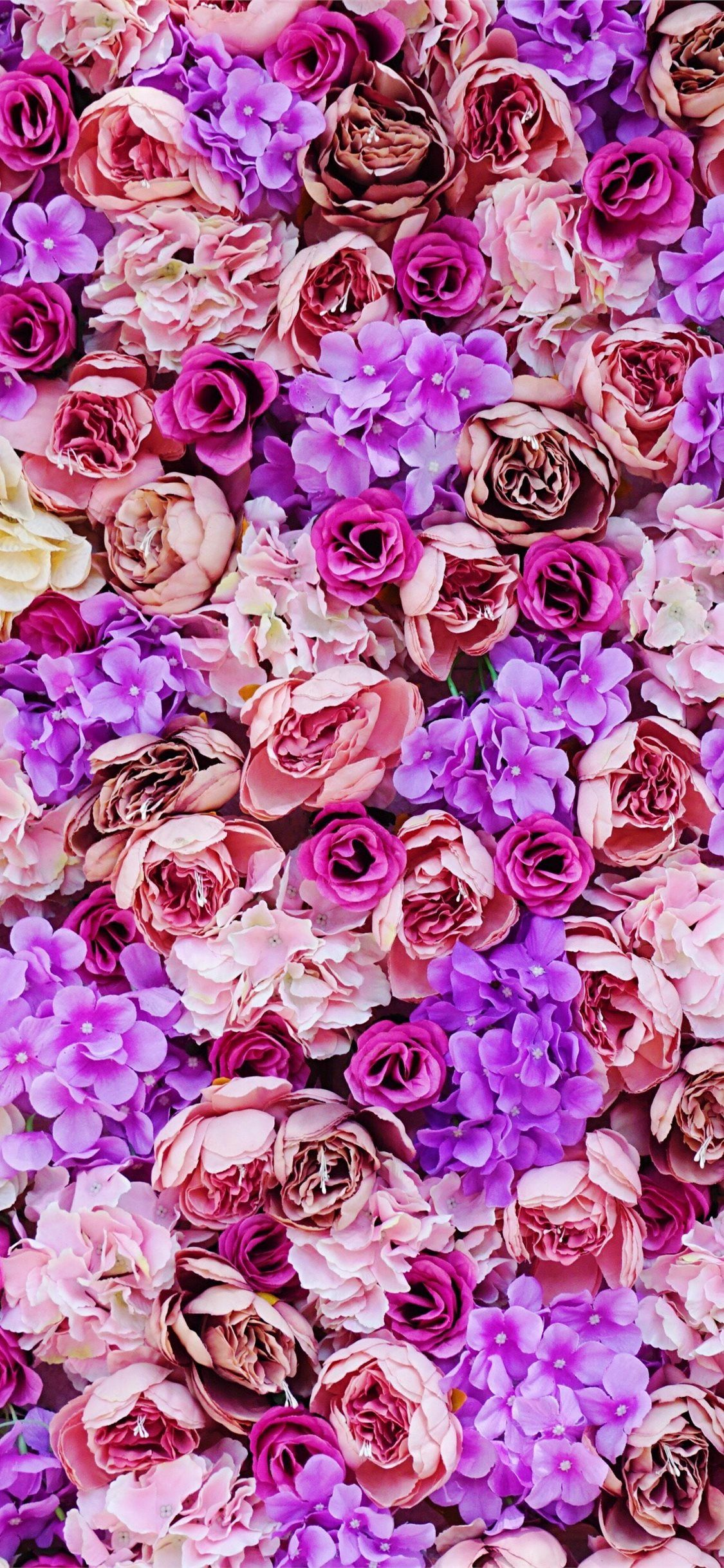 pink and purple petaled flower iPhone 11 Wallpapers in