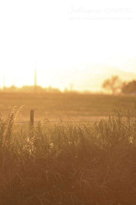 Art Photography Burnished Fields Country Landscape Sepia Photograph Nature Photography Nature Art Country Decor Wall Art Country Art Nature Photography Country Landscaping Beautiful Photography Nature