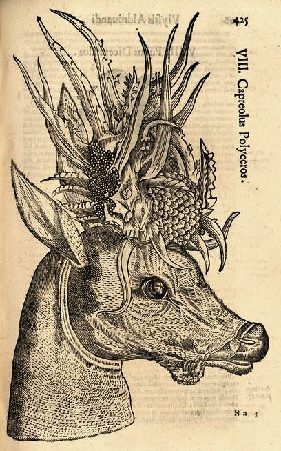 [][][] Ulisse Aldrovandi, (1642) Monstrorum historia. 16th century woodcut of monster - by Aldronvandi, the father of the natural history museum. Part of his original collection including many of his woodcuts of monsters are on display in Bologna's Museo di Palazzo