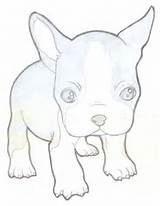 Boston Terrier Coloring Pages Search Yahoo Image Search Results Boston Terrier Art Boston Terrier Tattoo Boston Terrier Puppy