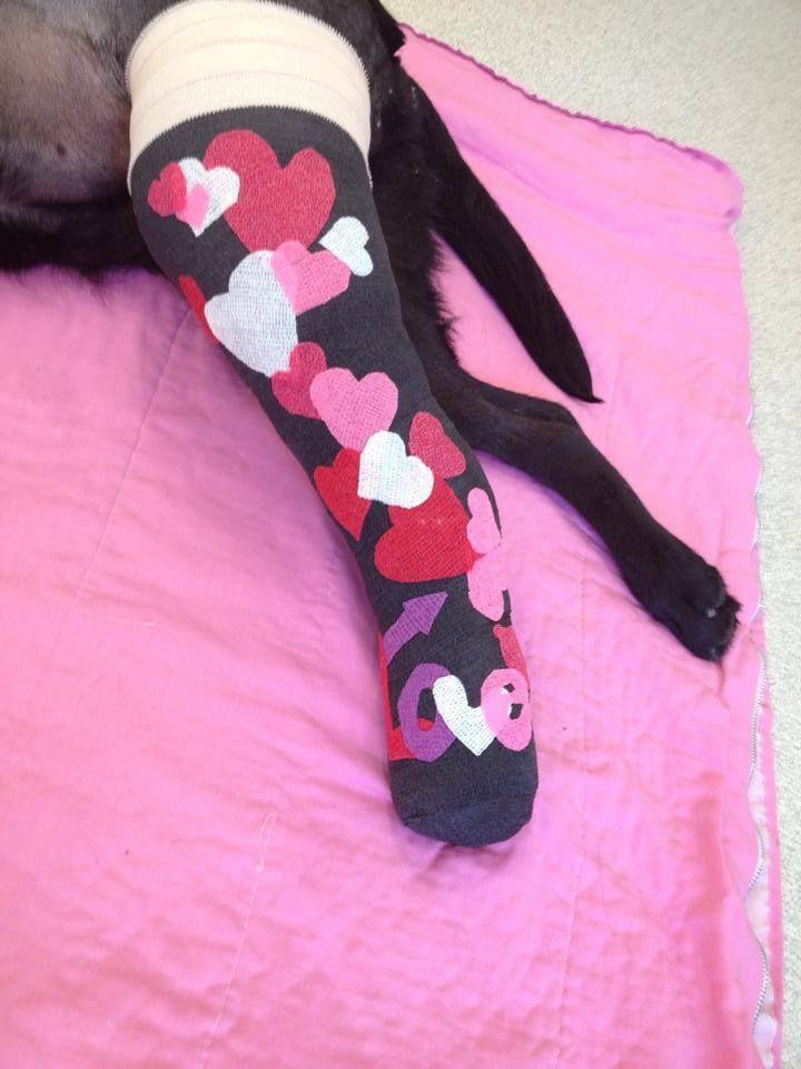 Valentine's Day bandage 2014 Veterinary tech, Vet