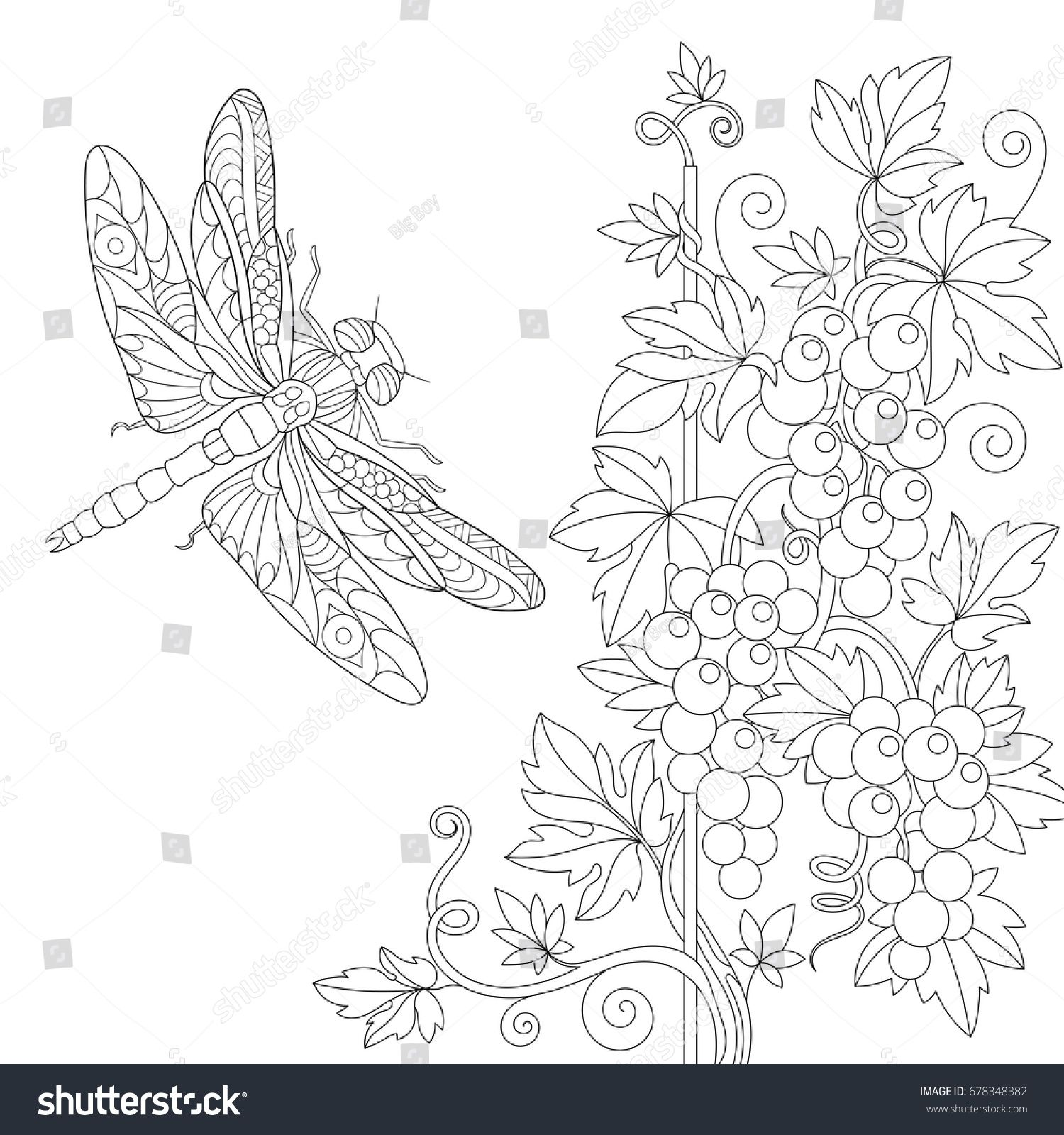 Coloring page of dragonfly and grape vine. Freehand sketch drawing ...