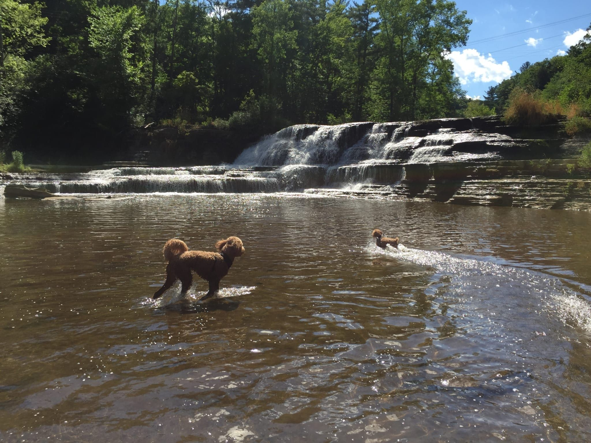 10 things to do with your dogs in the finger lakes in 2020