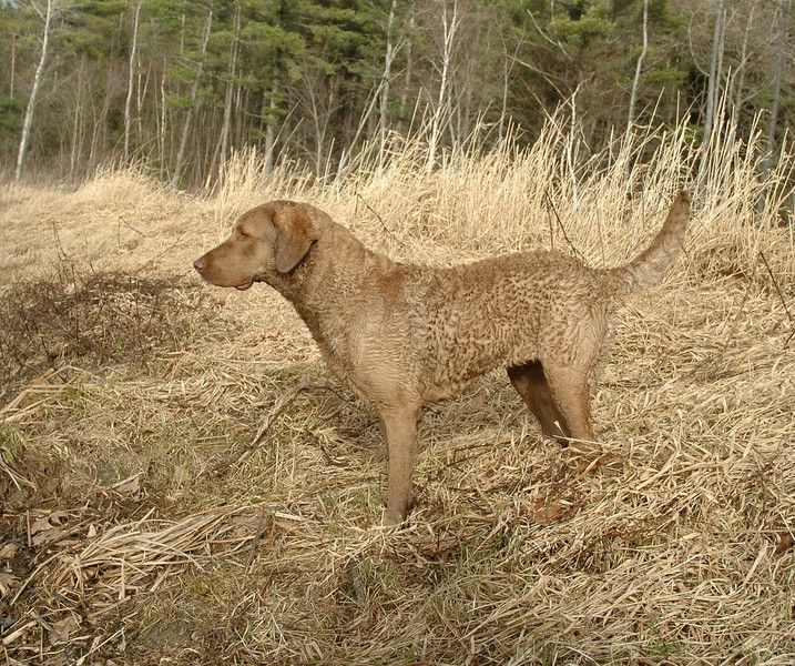 Image result for dead grass colour in dog