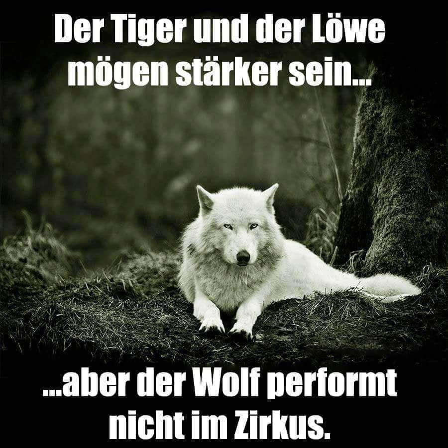 Sprüche wolf