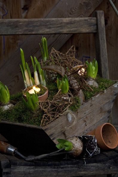 Great elements -- candle in pottery, well constructed natural box, gardening tools, nice bulbs and stick or grape-vine constructed stars!
