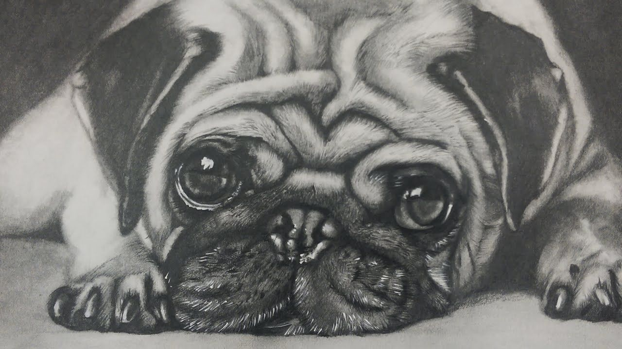 Drawing A Pug Puppy Dog Realistic Art Youtube Dog Face