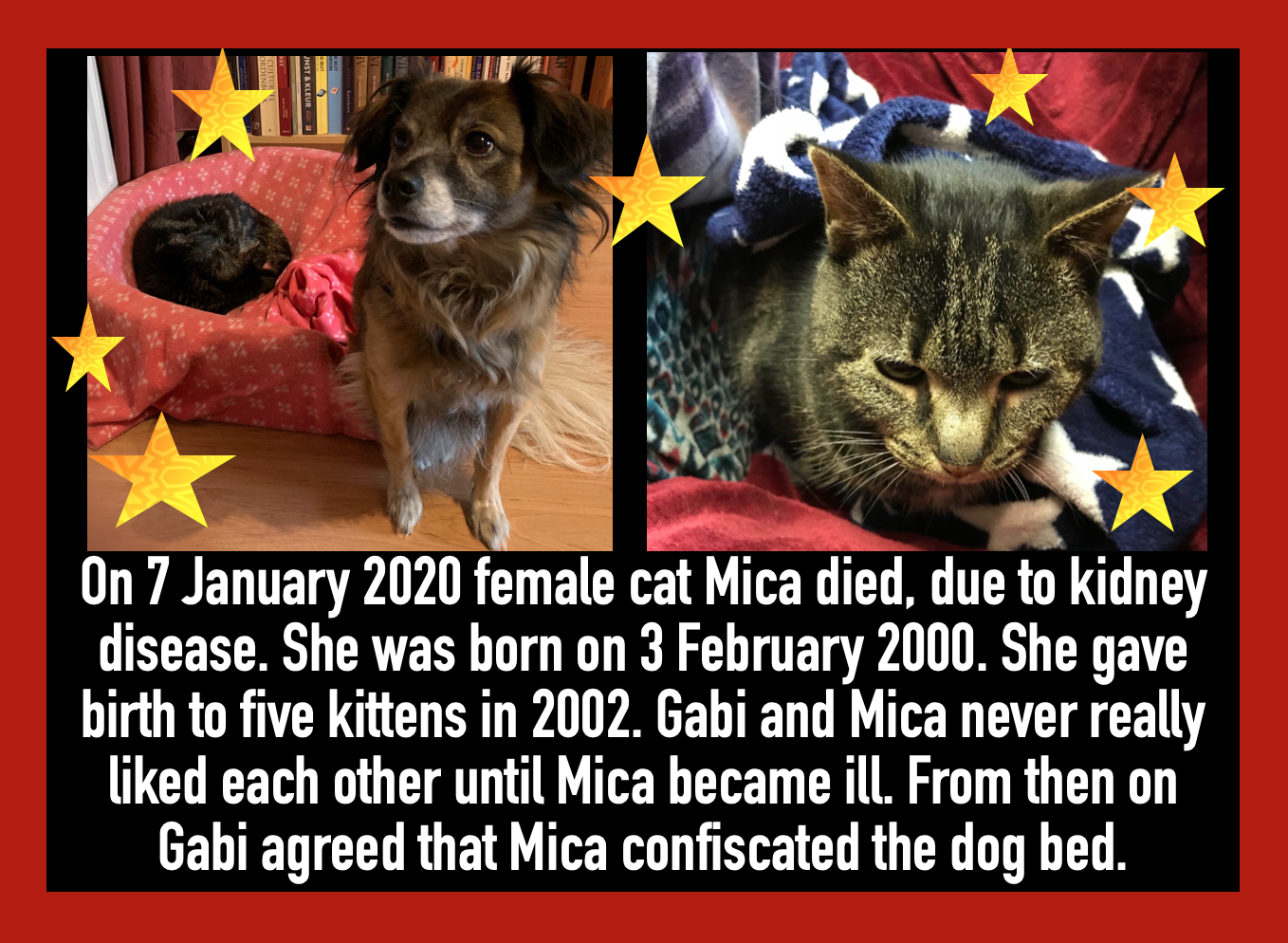Link To Elderly Cats Female Cat Mica 2000 2020 Cat Care Cat Lady Cats