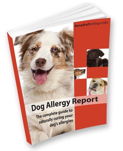 The Best Allergy Medicine For Dogs Dog allergies