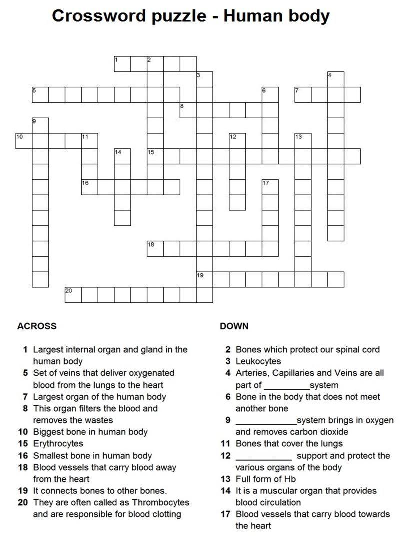 Human Body Crossword Puzzle Teaching
