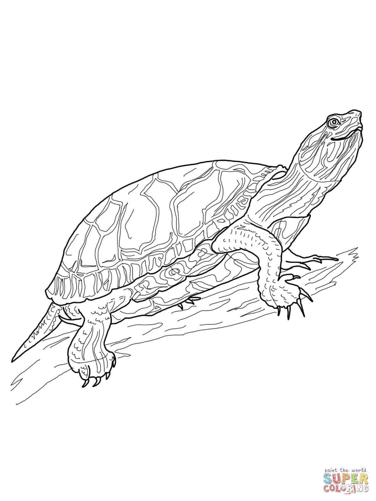 Western Painted Turtle Coloring Page Free Printable Coloring
