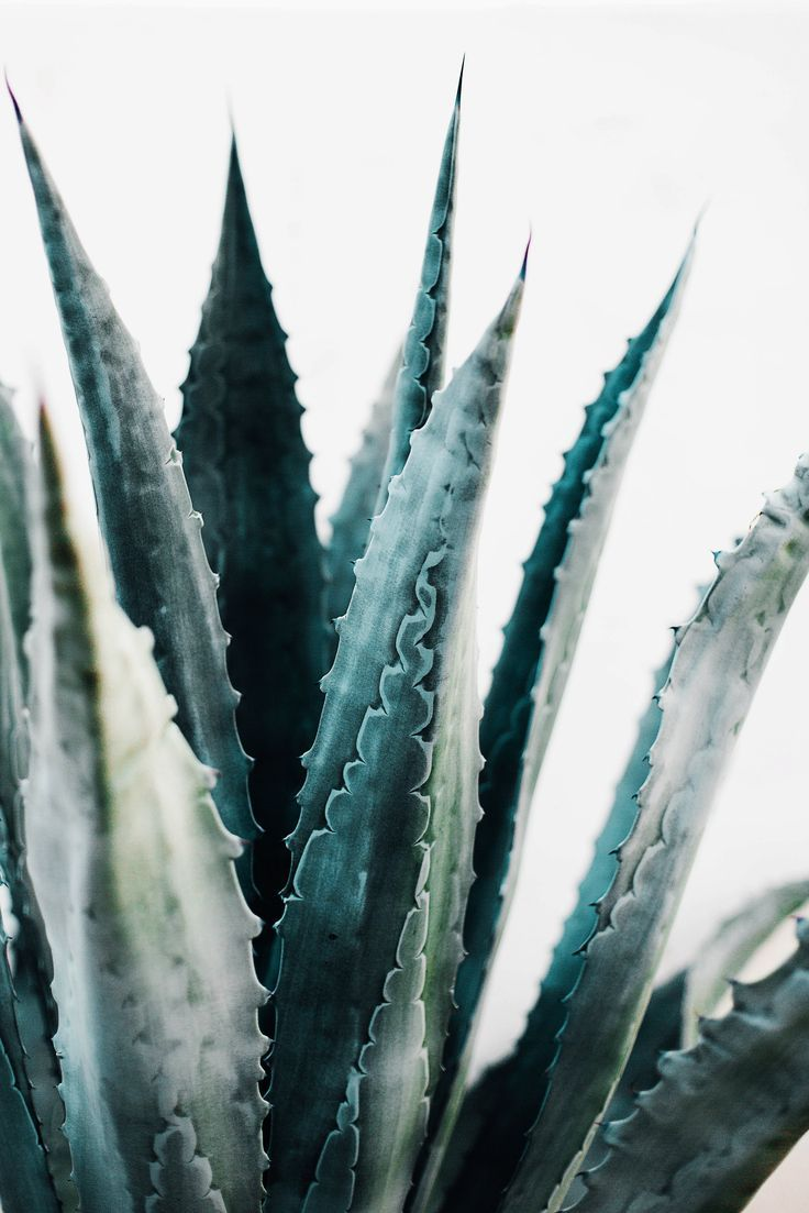 Palm Springs Macro Succulent Plants Planting Flowers Plant Life