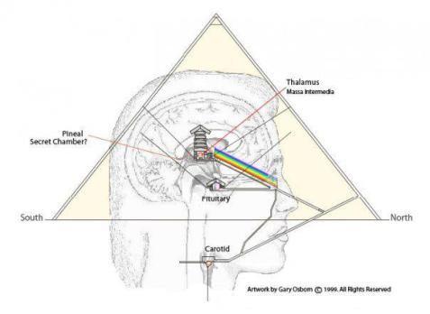 Piramide e pineale e pituitaria