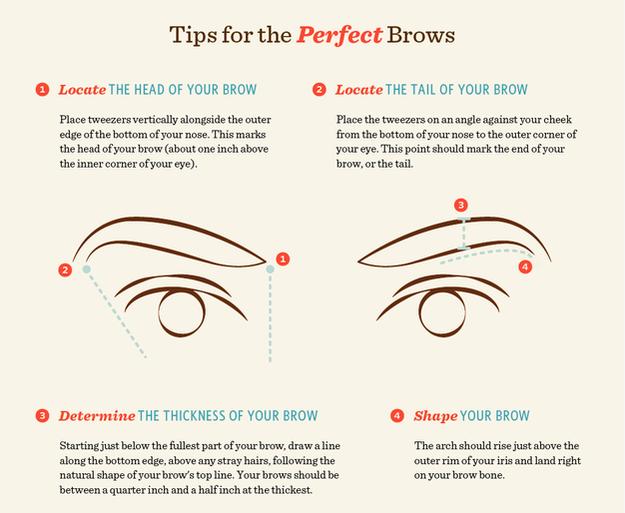 Learn Brow Terminology